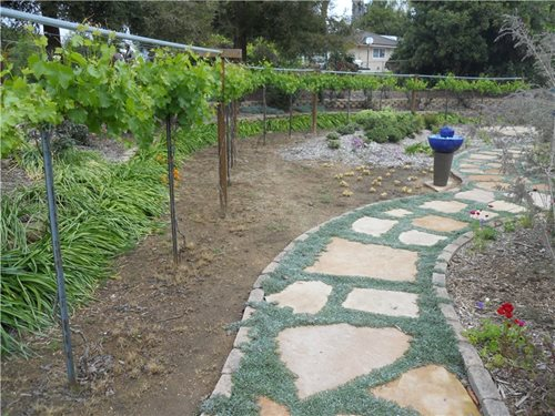 landscaping ideas hot weather