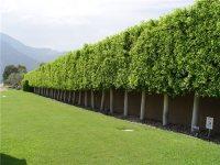 Landscape Wind Breaks - Landscaping Network