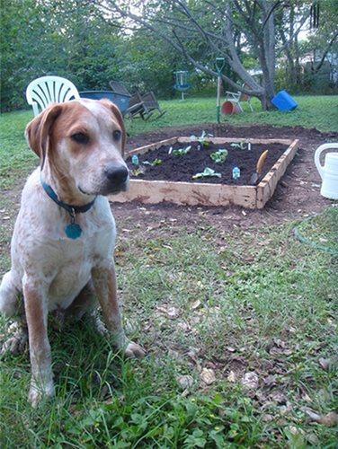 petscaping principles dog-friendly