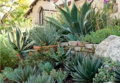 Cactus Landscaping Ideas Landscaping Cactus Plants