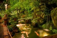 Garden Pond Design Ideas - Landscaping Network