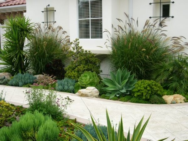 colorful -water plants - landscaping