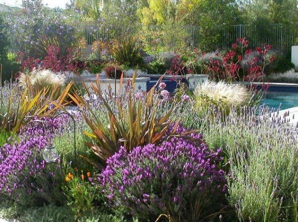 lawnless landscaping - albuquerque