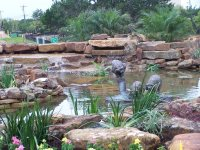 Pond and Waterfall - Austin, TX - Photo Gallery ...