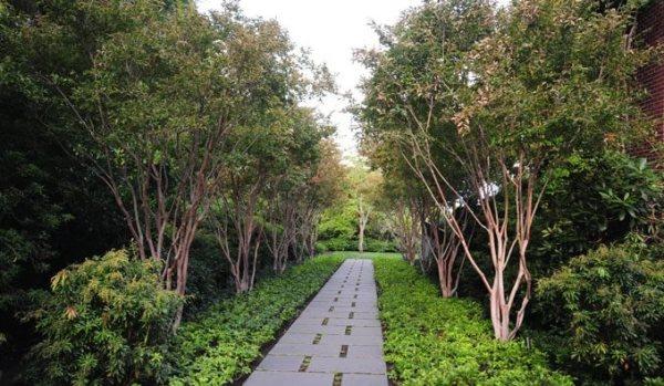 landscape trees - landscaping network