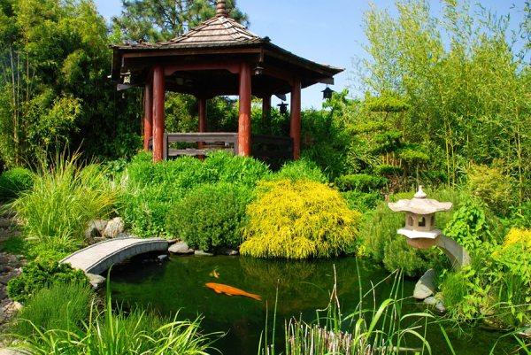 koi pond design & maintenance
