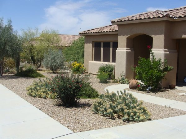 colorful desert courtyard - landscaping