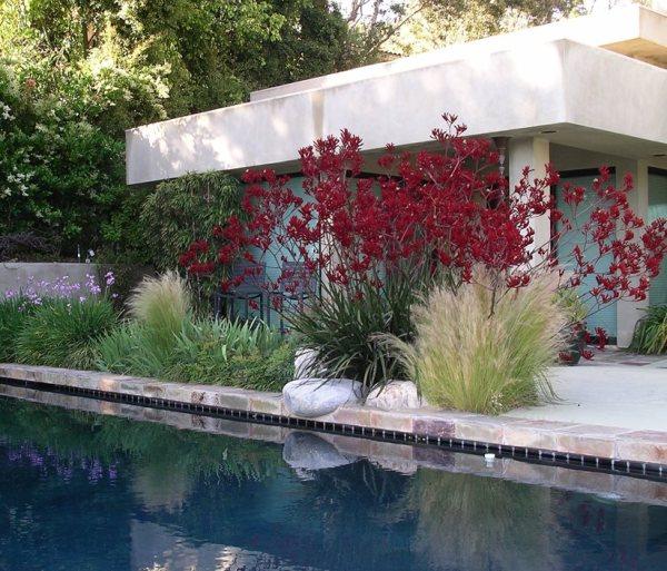 plants landscaping