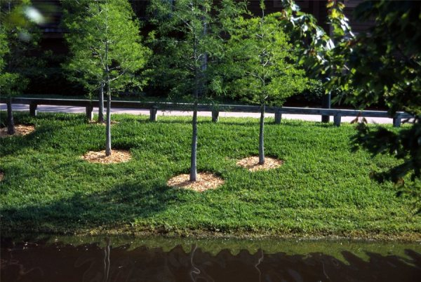 landscape planting mistakes - landscaping