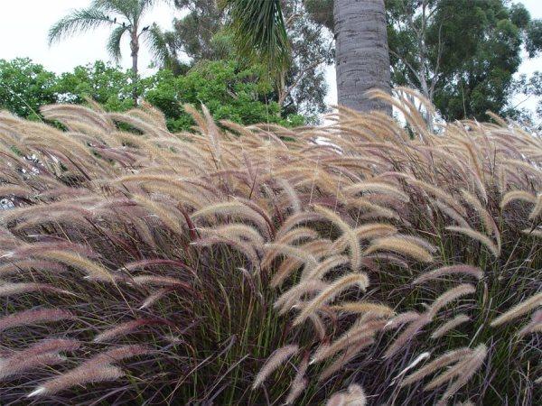 winter landscaping plants