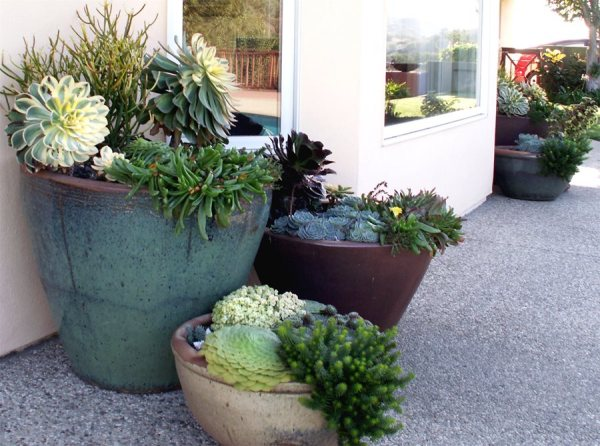 container garden tips - landscaping