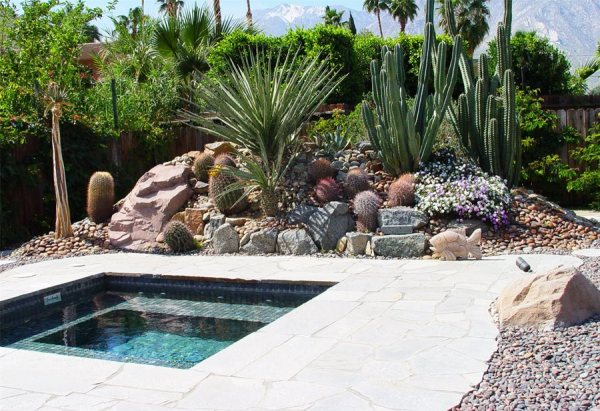 landscaping with succulents