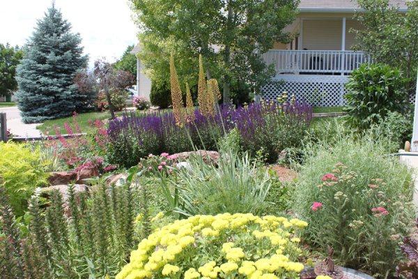 native landscaping plants
