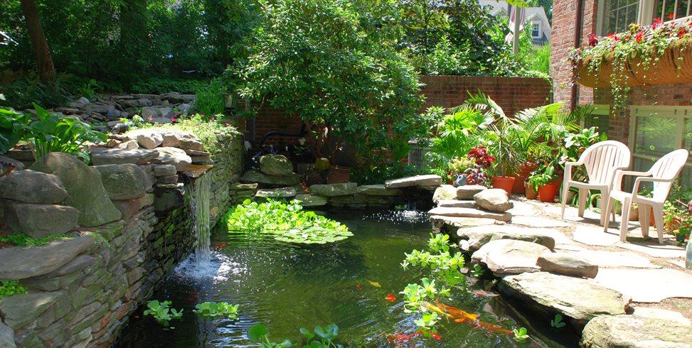 Koi Pond Design Maintenance Landscaping Network