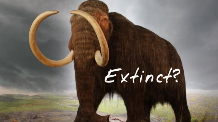 COD Extinction