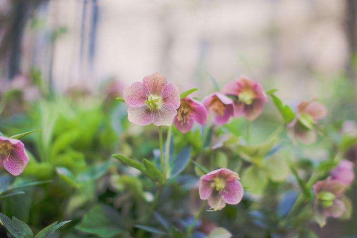 jardin de roses (3)