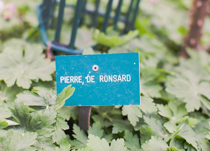 jardin de roses (5)