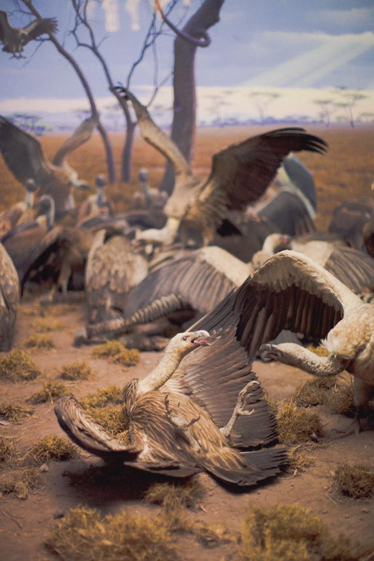 Musee histoire naturelle (12)