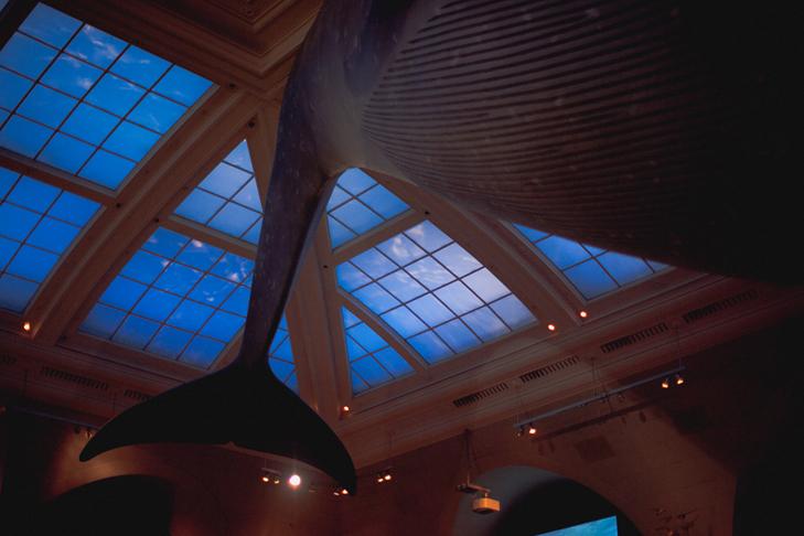 Musee histoire naturelle (3)