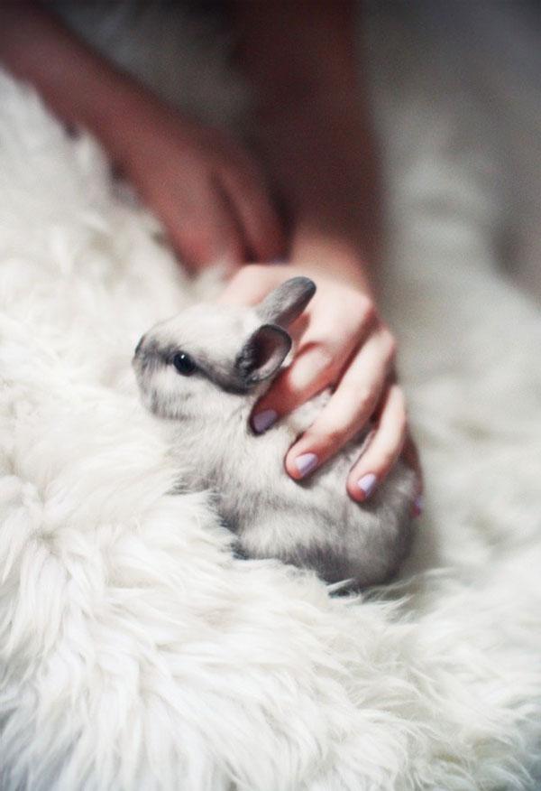 Bunnies (12)