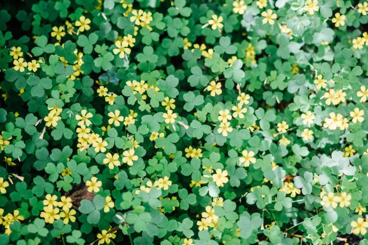 Botanical-garden00004
