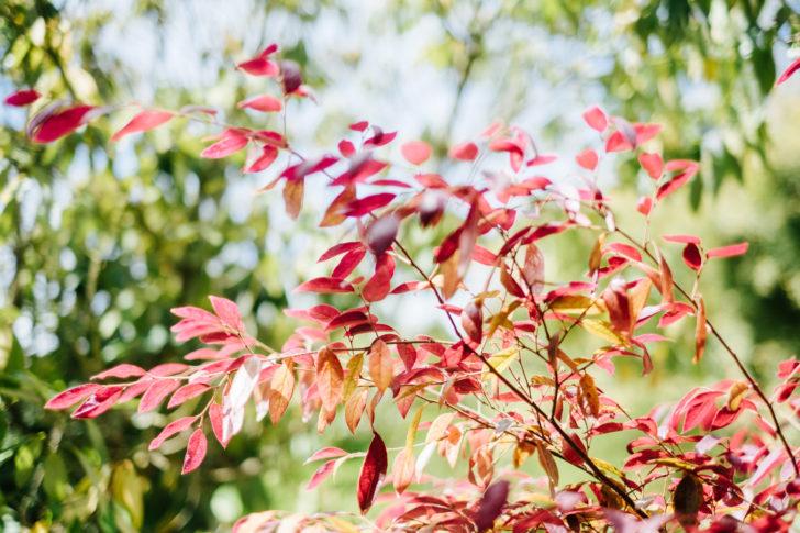 Botanical-garden00006