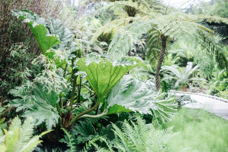 Botanical-garden00017
