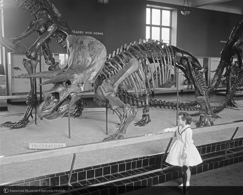 ID: 326625<br>Girl viewing triceratops skeleton, Cretaceous Hall, 1959