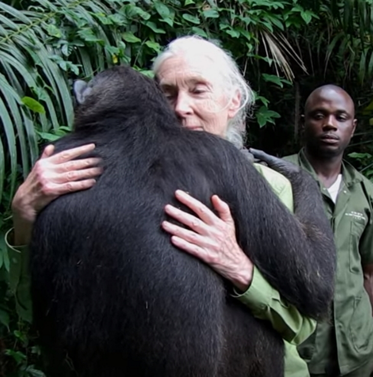chimp3 - She Takes Care Of Sick Chimp. Chimp Is About To Be Released, And Her Final Act Is Tear-Dropping