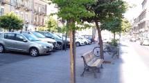 alberi catania