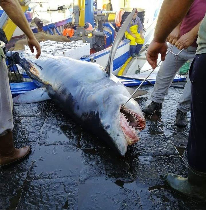 squalo Catania