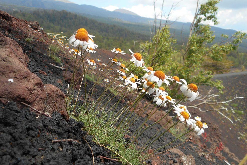Foto studio sull'Etna