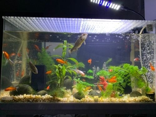 eco aquarium water purifier