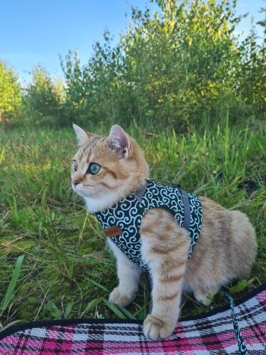 K***a review of Hushpaw™ Cat Harness Set
