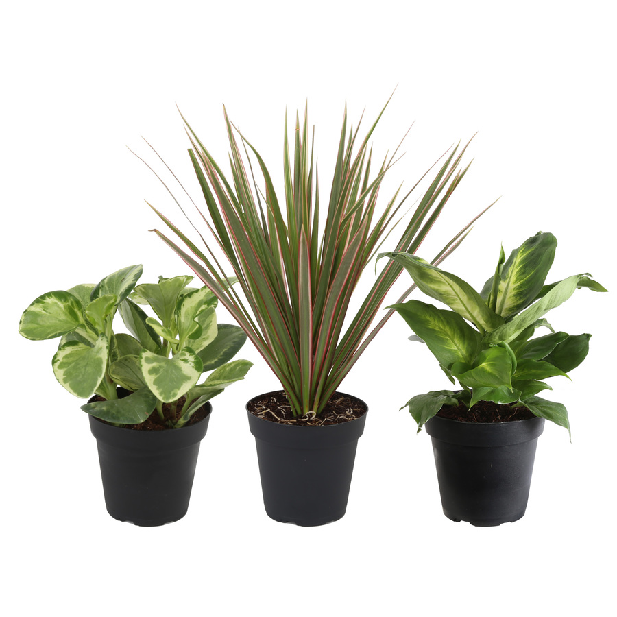 plants planters at lowes com