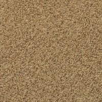 Shop SmartStrand Brewster Navajo Path Frieze Indoor Carpet ...