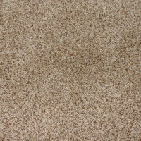 Shop STAINMASTER Weddington Sable Cut Pile Indoor Carpet