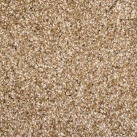 Shop STAINMASTER Stock Carpet Brown Textured Indoor Carpet