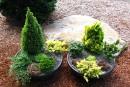 Un jardin de conifères miniatures en pot