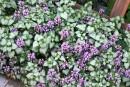 Des plantes avec du panache