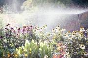Il y a environ 300 variétés de plantes... (Photo fournie par Croque Paysage) - image 2.1