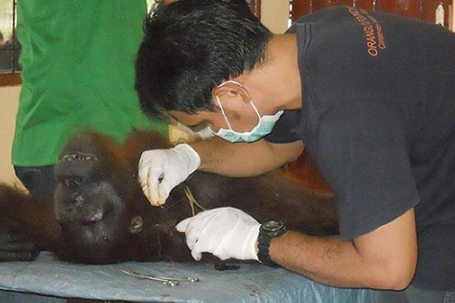 Un vétérinaire d'une agence de protection des animaux... (Photo: AFP)