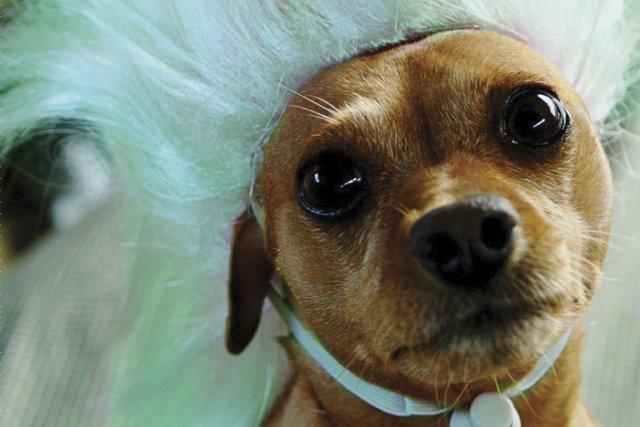 Are You Crazy About Your Dog or Are... (Photo fournie par l'éditeur)