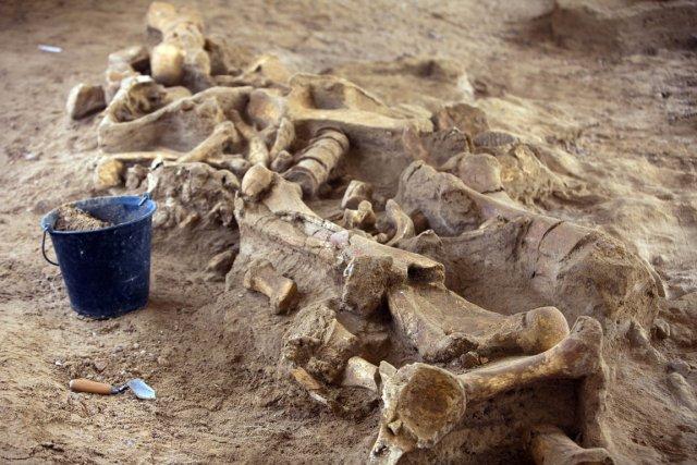 Encore en place, le squelette va faire l'objet... (Photo AFP)