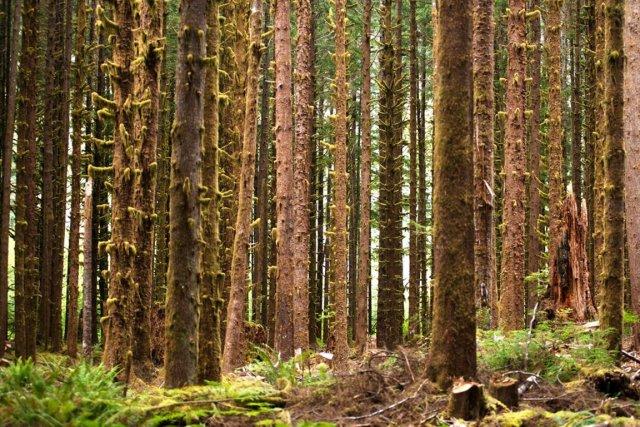 Le paléo serait-il une recherche de paradis perdu,... (Photo Masterfile)