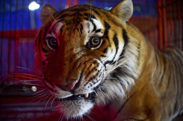 Comme beaucoup d'autres, le cirque des frères Cedeño... (PHOTO RONALDO SCHEMIDT, AFP)
