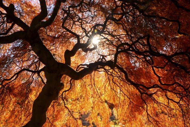 Les météorologues de MétéoMédia prévoient une saison d'automne très agréable... (Photo Archives AP)