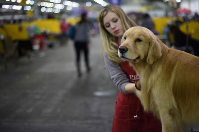 Les gros chiens à poil long, comme le... (PHOTO TIMOTHY A. CLARY, AFP)