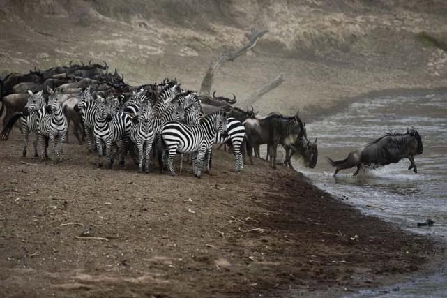 Leparc national du Serengeti, en Tanzanie, estlisté par... (PHOTO AFP)
