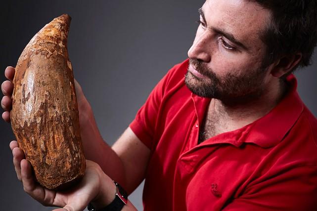 Erich Fitzgerald, paléontologue au musée Victoria, tient dans... (Photo Museum Victoria, AFP)